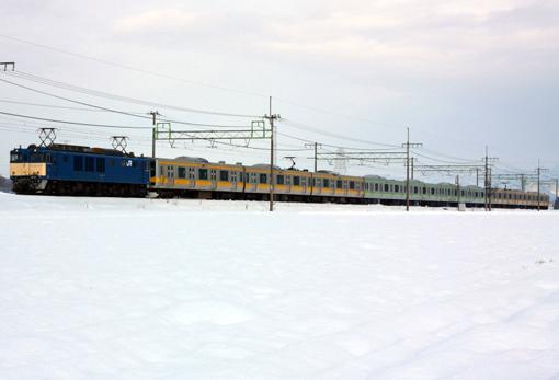 2011_01_05_hasegawa_kodai002.jpg