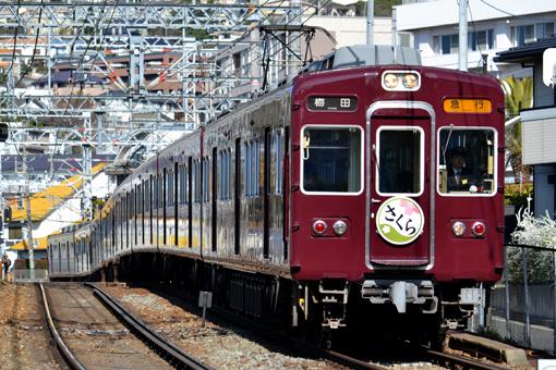 2013_03_22_nakatsukasa_sakura001.jpg