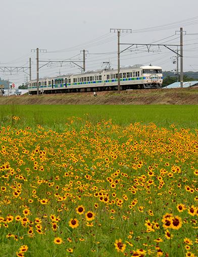 2013_07_13_ootani_masahiro001.jpg